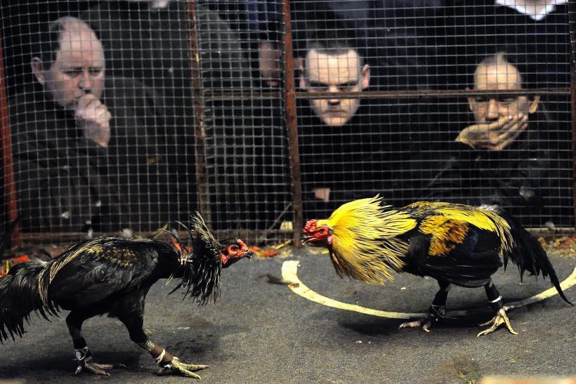 Transaksi di Sabung Ayam
